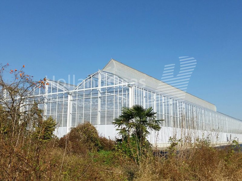 Holland Gaas netting system in polyhouses