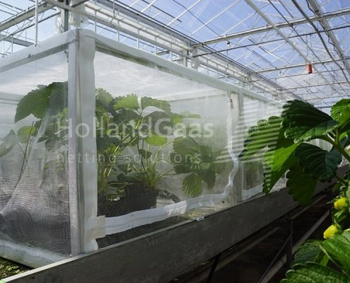 Holland Gaas Netting Cages