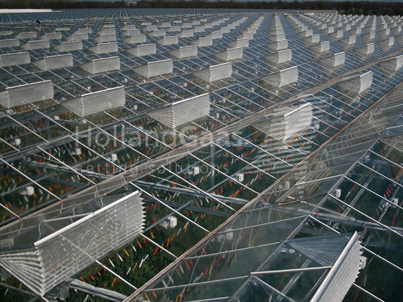 Holland Gaas netting system in a Venlo greenhouse